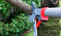 Tree Pruning Services in Staten Island NY